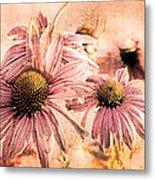 Echinacea Impressions  Metal Print