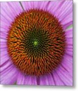 Echinacea Purpurea Rubinglow Flowers Metal Print by Tim Gainey