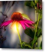 Echinacea Sunrise Metal Print