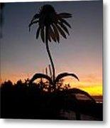 Echinacea Sunset Metal Print