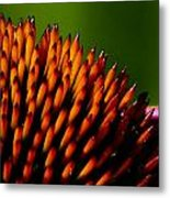 Echinacea Up Close Metal Print