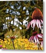 Echinacea With Bee Metal Print