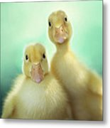 Edgar And Sally Metal Print by Amy Tyler