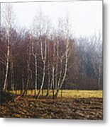Edge Of The Forest Metal Print