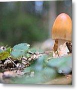 Egg Poppin Fungus Metal Print