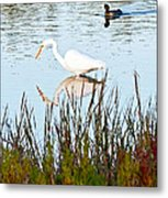 Egret And Coot In Autumn Metal Print