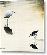 Egret And Stilt At The Grp Metal Print