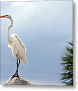 Egret And Tree Metal Print