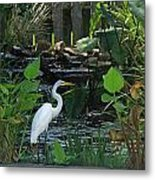 Egret At A Pond Metal Print