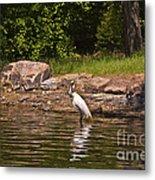 Egret In Central Park Metal Print