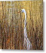 Egret In The Grass Metal Print
