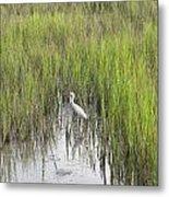 Egret In The Marsh Metal Print