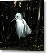 Egret Of Sanibel 2 Metal Print