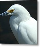 Egret Of Sanibel 7 Metal Print