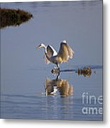 Egret Reflections Metal Print