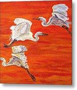 Egrets In Flight Metal Print
