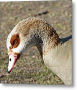Egyptian Goose Profile Metal Print
