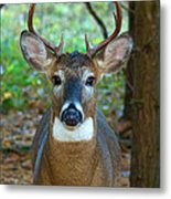 Eight Point Face To Face Metal Print