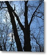 Elder Maple Silhouette Metal Print