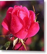 Electron Tea Rose Metal Print