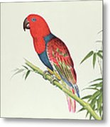 Electus Parrot On A Bamboo Shoot Metal Print