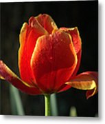 Elegance Of Spring Metal Print