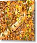 Elegant Autumn Branches Metal Print