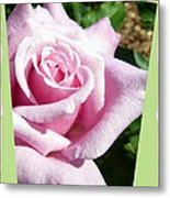 Elegant Royal Kate Rose Metal Print by Will Borden