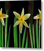 Elegant Yellow Flowers On Green Shoots Metal Print