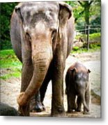 Elephant Baby Olli With Mommy Metal Print