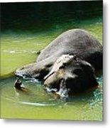 Elephant Bath Metal Print