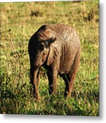 Elephant Calf Metal Print