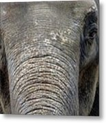 Elephant Close Up 1 Metal Print