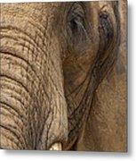 Elephant Close Up Metal Print
