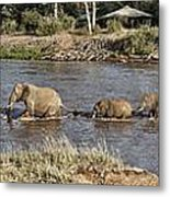 Elephant Crossing Metal Print