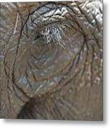 Elephant Eye Chiang Mai, Thailand Metal Print