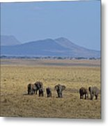 Elephant Family With Landscape Metal Print