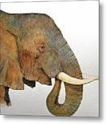 Elephant Head Study Metal Print