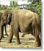 Elephant Metal Print