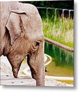 Elephant Open Mouth Metal Print
