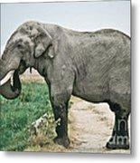 Elephant Roadblock Metal Print