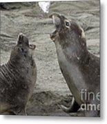 Elephant Seal Confrontation Metal Print