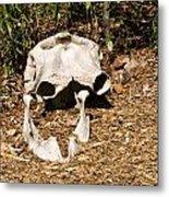Elephant Skull Metal Print