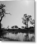 Elephant Skull On Riverbank, Okavango Metal Print