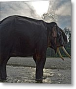 Elephant Taking A Shower On Its Own Metal Print
