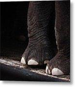 Elephant Toes Metal Print by Bob Orsillo