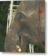 Elephant Under His Thumb Metal Print