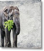 Elephant With A Snack Metal Print