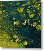 Elephants From Above Metal Print