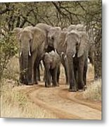Elephants Have the Right of Way Metal Print